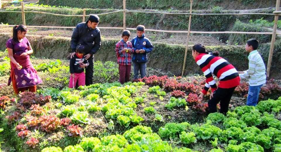अर्गानिक कृषि व्यवसाय सञ्चालनमा लागे शिक्षक